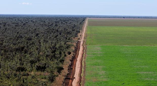 Brazil's biodiverse Cerrado region is at risk of deforestation for soy crops (WWF/PA)