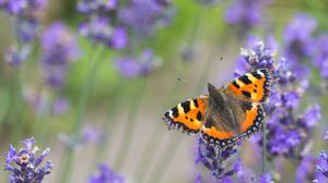 Nature-lovers are being urged to take part in the Big Butterfly Count (Christopher Mills,/Butterfly Conservation/PA)
