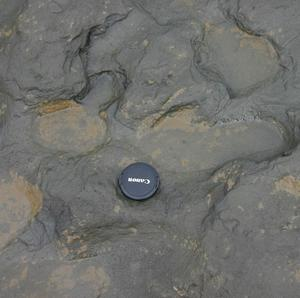 Some of the oldest human footprints in the world, thought to be more than 950,000 years old, found in silt on the beach at Happisburgh on the Norfolk coast (British Museum/PA)