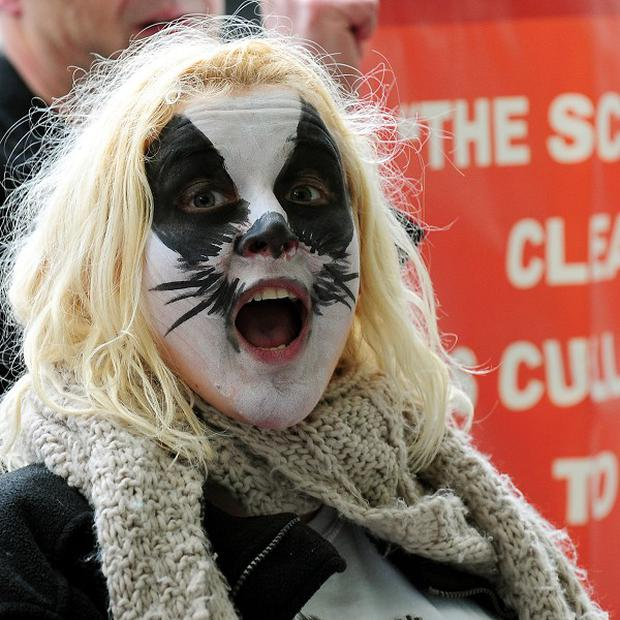 A protester campaigns against badger culling outside the National Farmer's Union annual Conference at the ICC, Birmingham