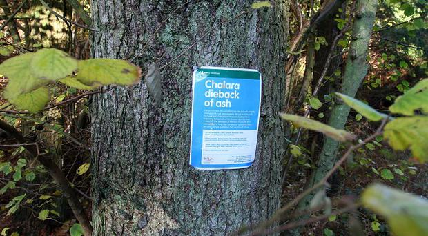 Ash dieback was discovered at hundreds of sites across the UK last year