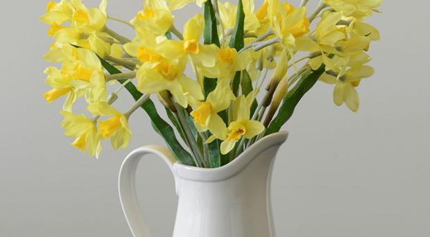 Fake daffodils are to be sold by John Lewis