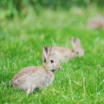A 30-year-old man has died after he suffered a gunshot wound while hunting rabbits