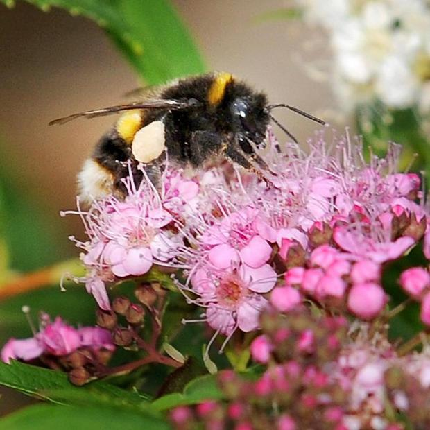 More than 1,000 bees have been killed in an attack on their hives in North Wales