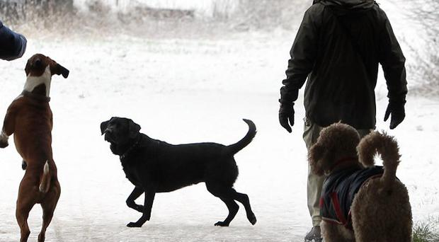 The campaign has been developed to encourage pet owners to identify their pet's body condition