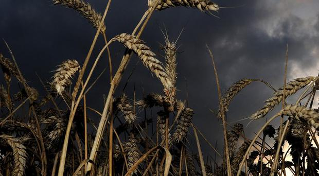 The controversy over genetically modified crops is set to be reopened