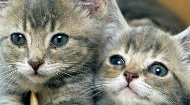 Kittens are among the pets which the RSPCA has found dumped in the last few months