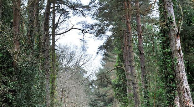The Forestry Commission is urging parents to look to their local forests as a place of entertainment for their children