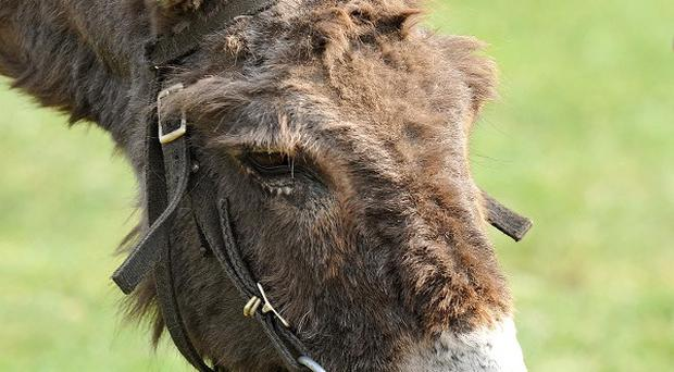 Donkeys have been subjected to violence, an owner has complained