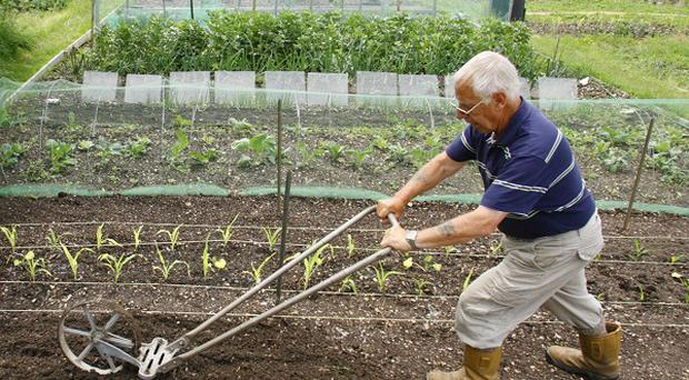A new poll has found that gardening is the favourite hobby among pensioners