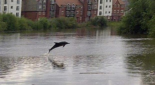 A dolphin was spotted in the River Dee (Environment Agency/PA)