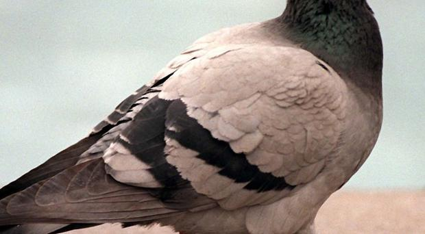 Feeding pigeons is against the law in Venice