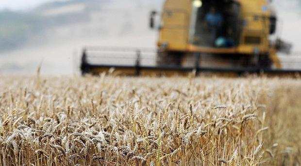 Last year was the wettest ever recorded in England, causing UK wheat yields to fall to their lowest levels in 20 years