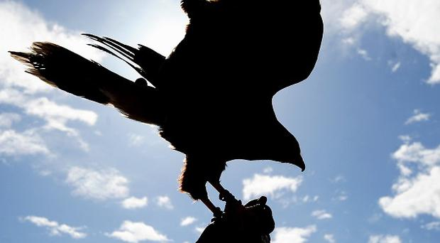The Harris hawk, named Prince, was stolen from an agricultural college in Dorset over the weekend
