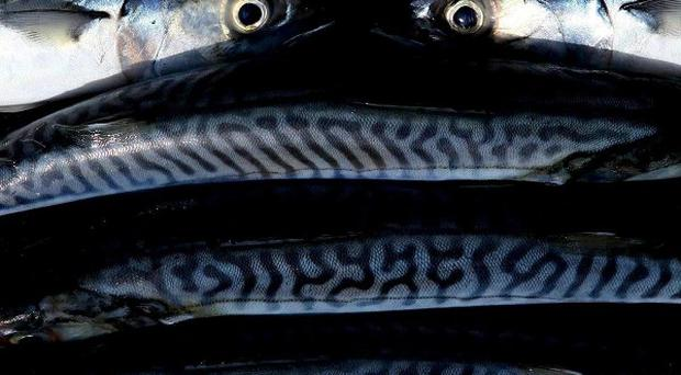 Eating oily fish rich in omega-3 fatty acids may not protect against cognitive decline, a study has shown.