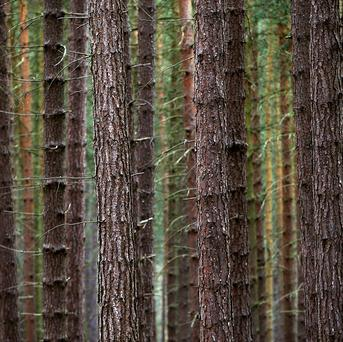 In 2010, the Scottish Government set a goal to plant 100 million trees by 2015