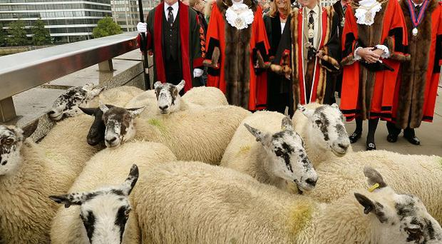 A total of 20 sheep were driven across London Bridge in an ancient ceremony