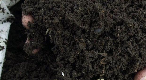 Scientists say bags of compost sold in the UK may be a significant source of Legionella bacteria