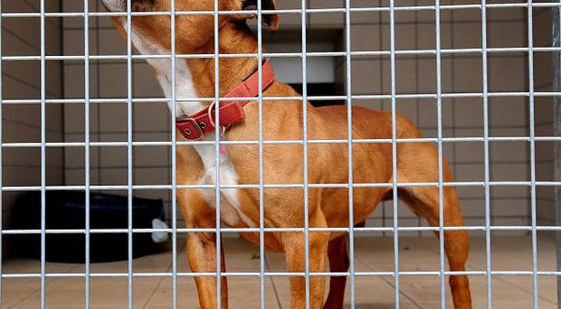 A woman has admitted cruelty charges relating to two Staffordshire bull terriers and two other dogs