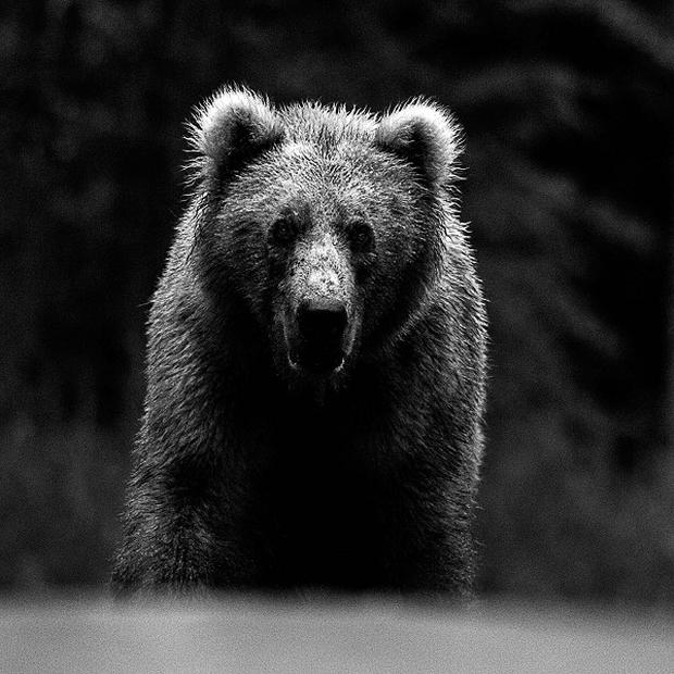 David Yarrow's photo of a bear as the self-taught wildlife photographer promotes his new book, Encounter