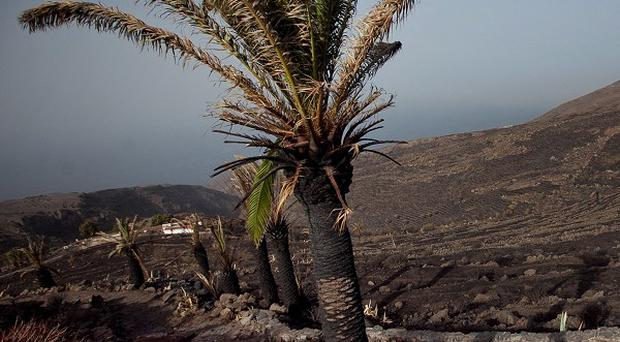 A British woman has died paragliding in Tenerife