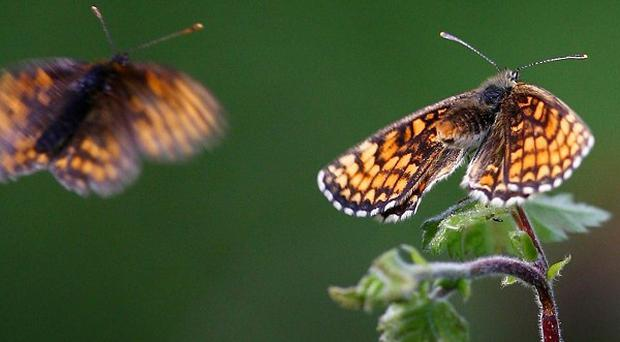 Sun-loving insects such as butterflies fared well after a hot July and August, the National Trust said