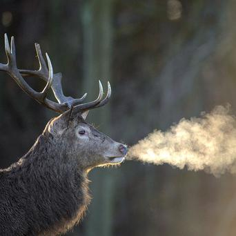 A woman has been badly injured by a stag which seemingly charged into her outside a property in the Scottish Highlands