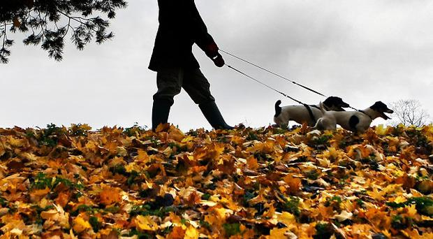 Proposal was contained in a Belfast City Council dog-fouling action plan