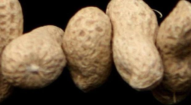 Dry roasted peanuts may be more likely to trigger allergic reactions than those that are