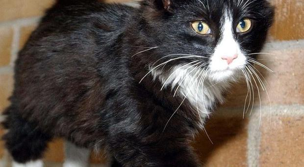 Two people in England have contracted TB from cats