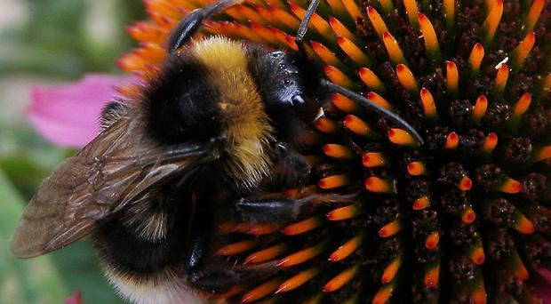 Research into the effects of neonicotinoid pesticides - which have been linked to declines in bees - will be funded by manufacturers under Government plans