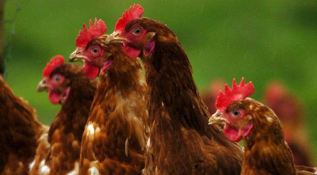 Food chiefs have been urged to name and shame retailers after a survey found that almost three fifths of fresh shop-bought chickens tested positive for campylobacter.
