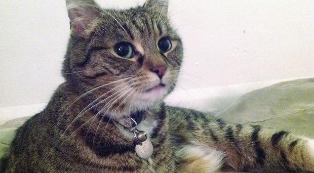 Freya, Chancellor George Osborne's cat, has been hit by a car and injured (Thames Reach/PA)