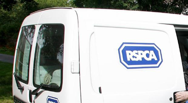 The RSPCA condemned the discovery
