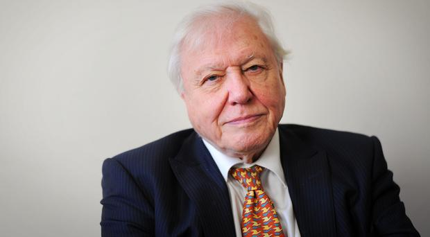 Sir David Attenborough says there is 'escalating erosion of wildlife' from the planet