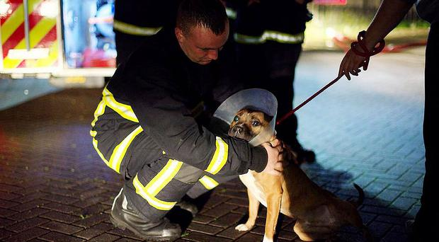 A fireman with a rescued dog after the blaze