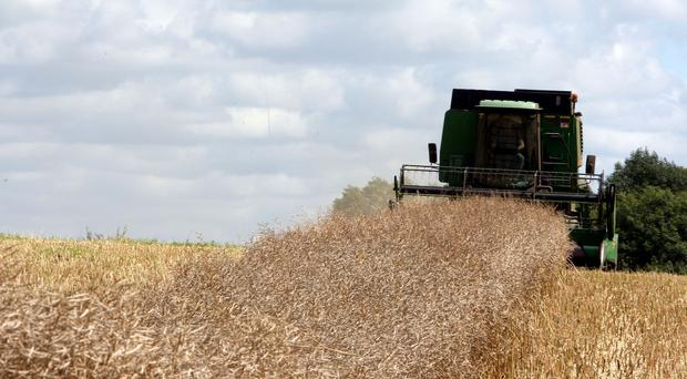 The Global Crop Diversity Trust said agriculture was being affected by climate change