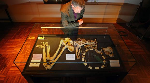 James Kenny, site excavator and planning archaeologist at Chichester District Council, views the skeleton known as Racton Man at the Novium Museum in Chichester, West Sussex