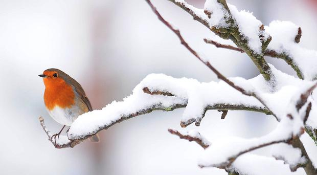 Forecasters say there is no chance of a white Christmas for most of the UK