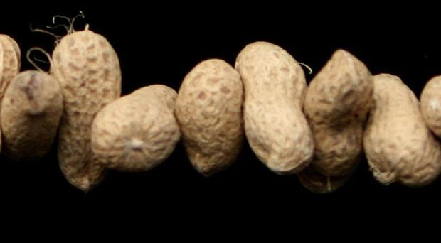 The study suggests that eating nuts is a cheap way of improving cardiovascular health