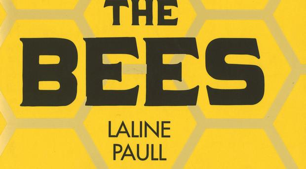 The Bees by Laline Paull is in the running for this year's Women's Prize For Fiction.