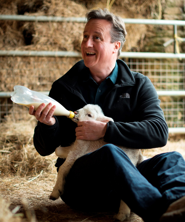 Prime Minister David Cameron feeding orphaned lambs on Dean Lane farm in Chadlington