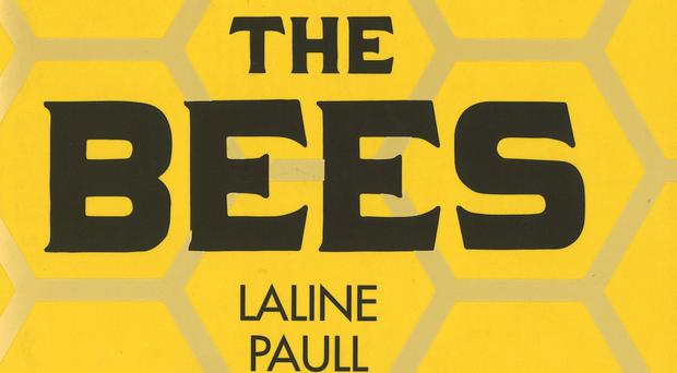The Bees by Laline Paull, which is in the running for this year's Women's Prize For Fiction (Amanda Johnson PR)