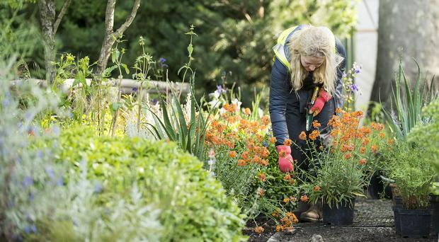 Final preparations are made to Prince Harry's Sentebale Garden