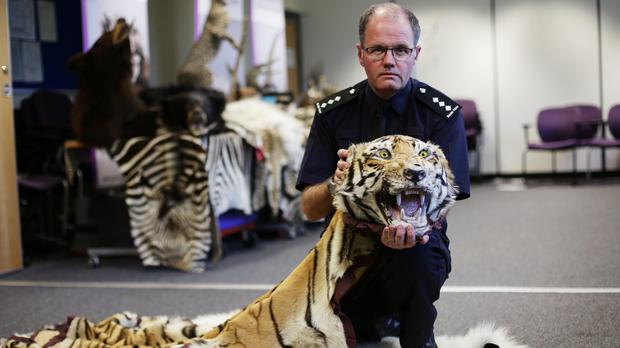 Border Force chief Grant Miller with a tiger pelt uncovered during Operation Cobra