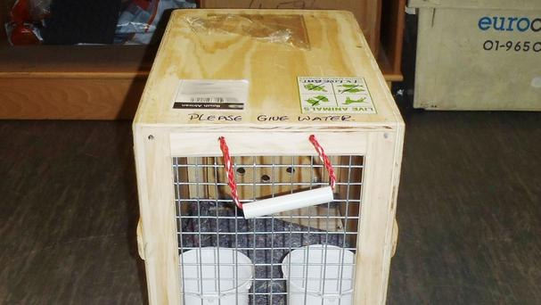 One of the animal crates which Scott Parker used tried to smuggle heroin into the UK (NCA/PA)