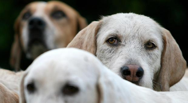 The amount of prosecutions involving dogs has shown a sharp rise