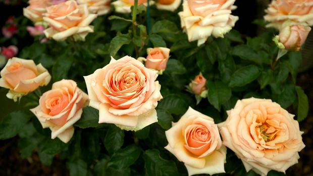 People with autism react to smells, such as that of a rose, in a different way, researchers found