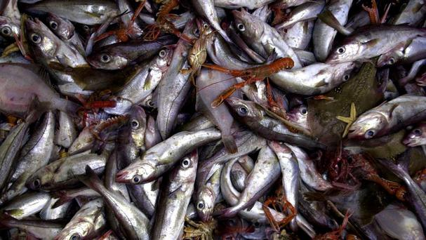 Almost half the fish consumed in the EU came from non-EU waters in 2014, a study shows