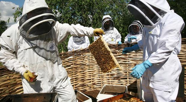 David Cameron said beekeepers should be consulted about pesticide rules